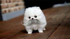 big mustache cutie