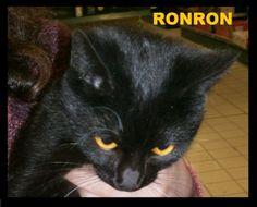 Ronron porte bien son prénom: attention à vos oreilles ! Dynamique et très joueuse, l'idéal pour Ronron serait de vivre en maison avec jardin Les Mistoufles(Finistère)