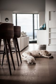 interior design, sleeping dogs, beauti interior, floor, world maps, white bedrooms, kitchen benches, bar stools, black
