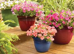 Accent your yard with Bombay planters--they're substantial-looking but light enough to easily move around your garden