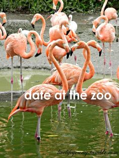 Have a zoo date. Find the one for you at http://www.onecrush.com/