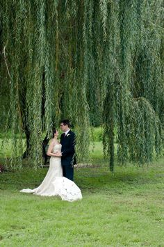 Pretty willow tree