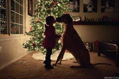 """Sometimes a picture is simply worth a thousand words....and a kiss on the nose can not only light up a Christmas tree, and a room, AND a dog's heart, but also light the hearts of a world of """"pinterest followers!!""""  :)   What power."""