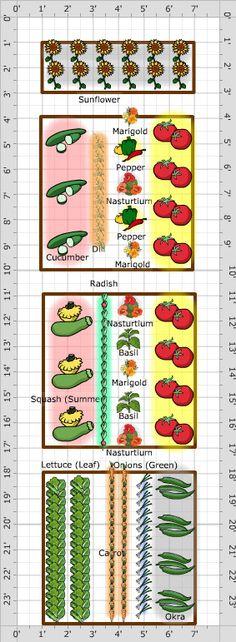 companion planting growveg.com