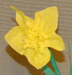 Nárcisz - Március 8.- Nemzetközi Nőnap - virág - papír