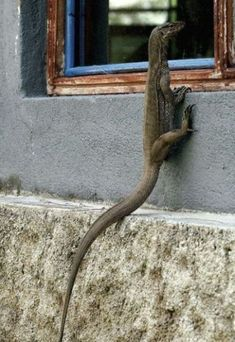 funny animals, at home, funny pics, window, funny pictures, jesus, baby monitor, homes, lizards