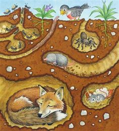 Science underground animals on pinterest ants leo for Animals that live in soil for kids