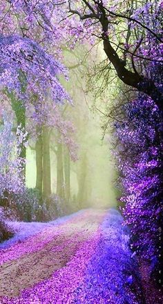 pathway, tree, color, purple flowers, forest, beauti, place, walk, the road