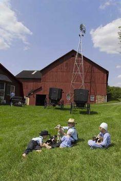 amish barn, amish children, amish life, farm life, barns