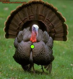 Turkey kill shot