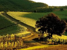 I would love to go to Tuscany!