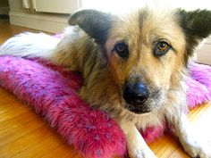 DIY Dog Bed from an Old Shag Rug!
