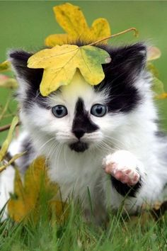 Cute kitty trying to catch flies in leaves... to see more click on picture