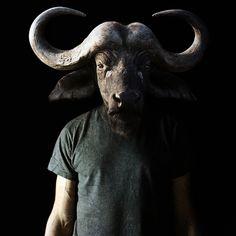Francesco Sambo, hybrid animal buffalo, photography.