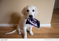 After trying unsuccessfully for many months to get pregnant they decided to get a puppy....