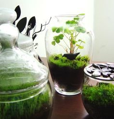 Discount Army: Green, Eco-friendly, Creative, gifts on a budget: The Terrarium