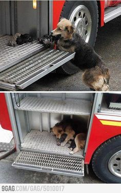 Dog saves all her puppies from a house fire.