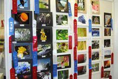 Judging | Community Creative Crafts & Skills | South Florida Fair