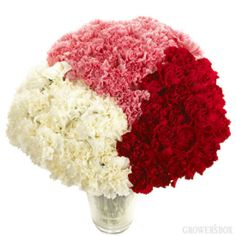 Carnations are one of the most versatile and affordable flowers in the floral industry. Carnations can be found adorning bouquets and arrangements of wedding flowers as well as boutonnieres, corsages, kissing balls, topiaries and garlands. Spruce up your next wedding or event venue by adding a dash of carnations to the mix! Visit www.growersbox.com for more information on wholesale carnations.