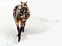 valscrapbook:    Pony in Snow by *CA* on Flickr.