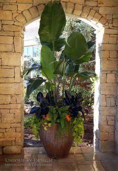 Tropical planter...Unique by Design l Helen Weis