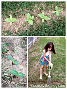 Grow sunflowers in your backyard with the help of your kids!