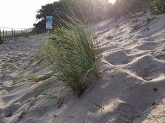 Cape Cod our beach