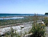 Travel Washington with your Ridgeback -  Birch Bay State Park = Washington