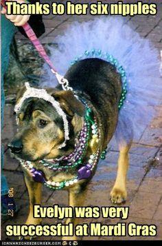 mardi gras puppy
