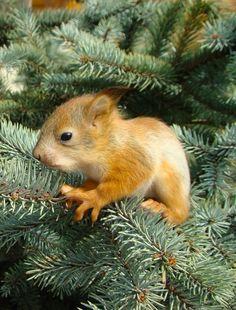 Baby squirrel  : )