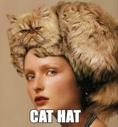 Crazy cat hat -  @Jennifer Lawson, this made me think of you!!  lol