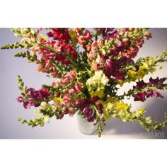 Add some variety to your bouquets and arrangements of flowers with beautiful Snapdragon flowers! These stunning flowers are sold in bulk and can often be found adorning arrangements of wedding flowers as well as event decorations. Available year-round from flower farms in California, Snapdragons are available in a wide variety of different colors! Select a specific color to blend with you decorations or choose assorted colors to mix it up! Visit GrowersBox.com for more information.