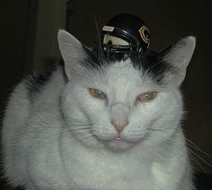 harri, cat