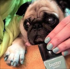 Cheeze and I had so much fun working on our matching mani. # Dog Manicures