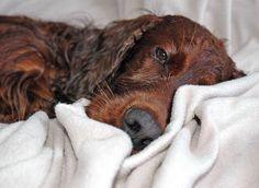 Como eliminar el mal olor de las mascotas?