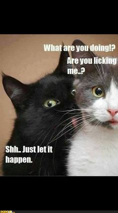 I am cracking up right now - this kills me...right as i say i'm gonna stop pinning...u pull me back in...hahahahha!