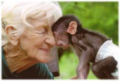 Rita Miljo— A great woman who saved thousands of baby baboons and reintroduced them into the wild, until her death in July 2012. She was 81 years old.