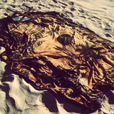 #ByronBay beach, #Australia