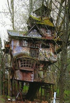 Awesome Tree House With Moss | Most Beautiful Pages