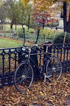 Autumn/    Stockholm, Sweden