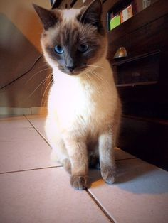 want cat, pet