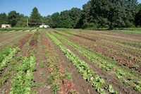 Design a Small Farm - How To Design a Small Farm