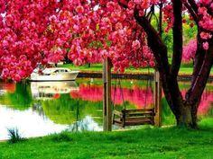 nature, lakes, fruit trees, beauti, pink, turkey, istanbul, swing, place