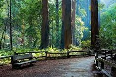 Redwood National Forest. nice place, nation park, nat park, nation forest, national parks, forest nation, redwood forest, favotit place