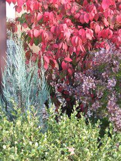 foliag color, garden design, contrast color, garden thing, backyard retreat