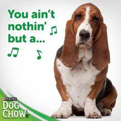 Yes, I know ... A hound dog...