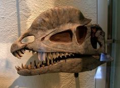 dilophosaurus | Dilophosaurus_skull.jpg