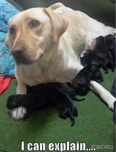 Well, You Know What They Say About Black Labs...