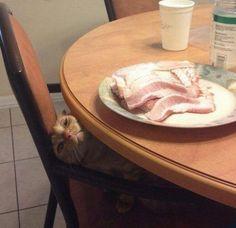 Ninja Cat - Waits For His Next Victim…