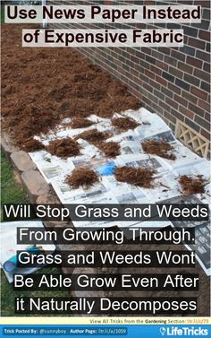 Gardening - Use Newspaper Instead of Fabric to Stop Grass and Weeds